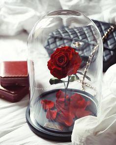 The infinite beauty of a rose is priceless! ( Frumusețea infinită a unui trandafir este de nepretuit ! ) #Rose #Love #Luxury #Gift #Beautiful #Birthday #Trandafir #Dragoste #Lux #Cadou #Frumos #Aniversare #Box #Flower #Sexy #2016 #New #Art #Cutie #Flori #2017 #Nou #Gentleman #Iubita