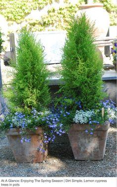 Amazing Ideas for French Country Garden Decor 55 - garden landscaping Garden Shrubs, Garden Planters, Garden Landscaping, Box Garden, Country Landscaping, Landscaping Ideas, Planter Pots, Pot Jardin, Cypress Trees