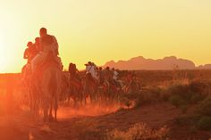 Tour & Transport Operators - Uluru Camel Tours
