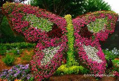 Butterfly made out of flowers