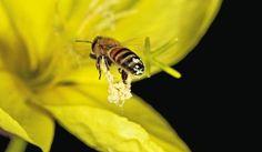 En imágenes: el instante en que las flores le entregan su polen a aves y abejas   Entretenimiento   W Radio Colombia