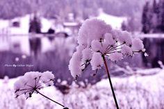 Impressionen Kitzbühel Dandelion, Flowers, Plants, Dandelions, Flora, Plant, Royal Icing Flowers, Flower, Florals