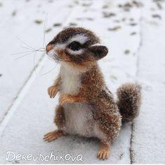 Baby squirrel?