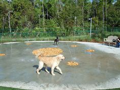 Outdoor dog park with water features