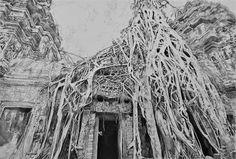 Acoustic Drawings The Shinji Ogata Gallery: Ta Prohm, Cambodia 9 タ・プローム(カンボジア) 9