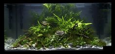 https://flic.kr/p/9ek1Hi | XL - placed no 7 | Aquascapes in the XL (10x50x50cm) competition at the Art of the Planted Aquarium, Hannover 2011