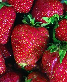 Quinault Strawberry - A popular variety of everbearing strawberry. Large, soft, deliciously sweet fruit ideal for preserves or fresh eating. Produces from late spring through fall. Developed by Washington State University, this variety is popular everywhere for its delicious berries that are perfect for home gardens