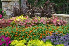 Texas gardening guides by month:  Beat the heat with sun-loving blooms, pest control, good lawn care and sun protection. Pick up the pace for planting and planning