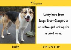 Lucky here from Glasgow loves to be doing energetic things like chasing and playing with toys. Dogs Trust, Glasgow, Just Love, Fur Babies, Toys, Baby, Animals, Activity Toys, Animales