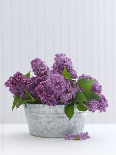 Lilac bouquet..I can almost smell them