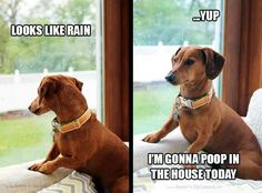 Dustin's stupid little dog...