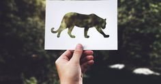 Free stock photo of adult, animal, blur