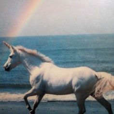 #Sea Unicorn