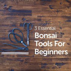 Learn the 3 essential tools to get started in the bonsai hobby. #bonsai #bonsaitree #bonsaiplants #bonsaigarden