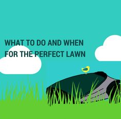 Keep your lawn looking perfect by carrying out essential lawn maintenance at the right time of year.