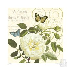 French Rose Giclee Print by Paula Scaletta at Art.com