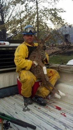 Rescuing animals (#kangaroo) this is not a kangaroo! It looks to me like a deer......whatever the poor creature is, it has been rescued and that is the main thing. Wildlife workers do a tremendous job!