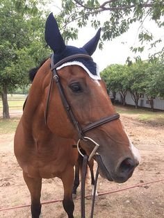 How to crochet a fly bonnet for your horse...cute!
