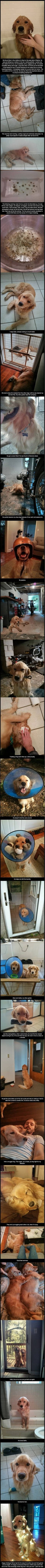 Here's the Story Of Bran A Golden Retriever Rescued From Living Alone In The Woods animals dogs adorable dog story puppy animal pets stories heart warming golden retriever Animals And Pets, Baby Animals, Funny Animals, Cute Animals, I Love Dogs, Puppy Love, Cute Dogs, Gato Animal, Humanity Restored