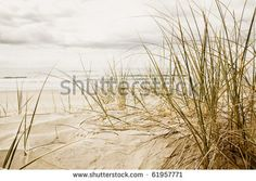 Close up of a tall grass on a beach during stormy season - stock photo