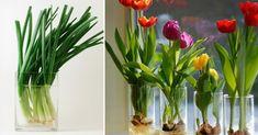 Esta serie de plantas pueden vivir fácilmente sin tierra, por lo que no tendrás que gastar tiempo en regarlas y mantenerlas, ya que siempre estarán impecables en un vaso con agua. Growing Vegetables, Floral Arrangements, Glass Vase, Canning, Flowers, Plants, Gardening, Salvador, Ideas Decoración