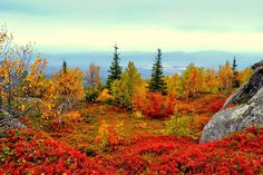 Lapland, Finland in the Fall Lapland Finland, Scandinavian Countries, Lappland, Excursion, What A Wonderful World, Destinations, Helsinki, Amazing Nature, Wonders Of The World