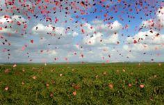 "Saatchi Art Artist Yigal Pardo; Photography, ""Confettical  landscape # 23b- Limited Edition # 1 of 8"" #art"