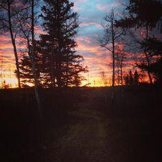 À la nuit tombée, nous commençons à entendre les coyotes, proches de la maison, au beau milieu des bois ☺️☺️ #canada #saskatchewan #meadowlake #helpx #pvt #pvtistes #whv #sunset #night #coyote #pink #blue #yellow #instagood #instatravel #instalove #travel #tree #trip #voyage #backpacker #forest #foret