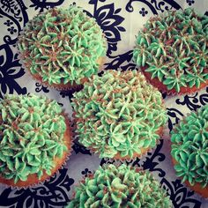 Peppermint flavored cupcakes🍬🌱 #newflavour #peppermint #fresh #delishbakes #bakedwithlove #vanilla #chocolate #different #cupcakestagram… Gourmet Cupcakes, Cupcake Flavors, New Flavour, Fresh, Peppermint, Succulents, Vanilla, Chocolate, Plants