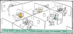 The first - and last - Take Your Cat to Work Day.