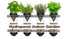 http://www.zapatag.com/profile/173388  Hydroponic Gardens  Hydroponic Gardens,Hydro Farming,Hydrofarm  As you view your pH rectification method actings in the form of a body of water butt hydroponic gardening provisions as defended to a bass tray.