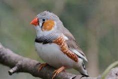 Resultado de imagem para birds