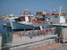 Naoussa Paros | Inktvissen