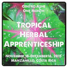 Centro Ashé Tropical Herbal Apprenticeship One Month Immersion into the Herbal Medicine of   the Caribe Sur of Costa Rica November 18-December 16, 2015 Join us in the quaint beach village of Manzanillo for a month exploring tropical herbal medicine, where the jungle meets the Caribbean Sea!  Our tropical immersion in an amazing opportunity to truly immerse yourself here in the local culture, to explore plant medicine while surrounded by the infamous natural beauty.