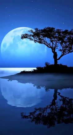 Blue Moon / Water / Silhouette of Tree Beautiful Moon, Beautiful World, Beautiful Places, Moon Pictures, Pretty Pictures, Blue Pictures, Colorful Pictures, Wallpaper Photo Gallery, Shoot The Moon