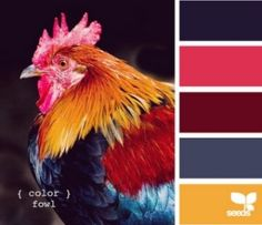 Design Seeds - I don't know why I love roosters. Colour Pallette, Color Palate, Colour Schemes, Color Patterns, Color Combos, Design Seeds, Viva Color, Colour Board, World Of Color