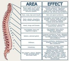NERVE PAIN REFERRED / AREA AND EFFECTS/DERMATOME CHART - Zeros