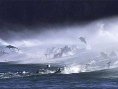 Dolphins at the Waterfall Bluff in the Transkei, South Africa. pic.twitter.com/ur1VBGn6vN