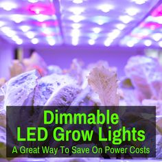 Dimmable LED grow lights are not that common. I admit, I thought there were far more of them. But when I started researching, I mainly found the ones I already Growing Marijuana Indoor, Cannabis Growing, Growing Weed Indoors, Growing Plants, Weed Plants, Best Led Grow Lights, Compact Fluorescent Bulbs, Seed Bank, Grow Tent