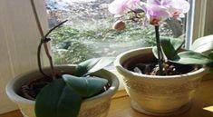 Ricinusolaj a növények számára