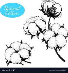 Set of hand drawn cotton plant branch with vector image on VectorStock Cotton Painting, Easy Canvas Painting, Artist Aesthetic, Aesthetic Painting, Botanical Drawings, Botanical Art, Vintage Quilts Patterns, Branch Vector, Cotton Plant