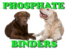 A dog's health and quality of life are severely undermined by the build-up of toxic blood phosphorus during canine kidney disease. Controlling how much phosphorus dogs eat becomes a priority in later stages of the condition and phosphate binders become an increasingly essential component in battling the disease.