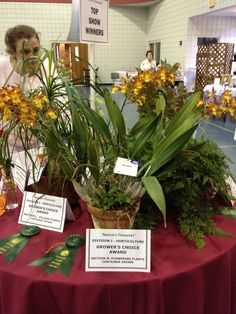 Grand Prize Winner - greenhouse orchids by Dallas Eubanks, consultant to the Magnolia Garden Club