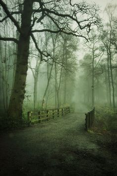 Balloch Park, Argyll and Bute, Scotland by Mark Harris