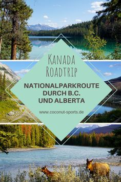 Canada Round Trip: Highlights on the National Park Route from Vancouver to Banff - Coconut Sports Reisetipps und Reiseführer - Travel Vancouver Island, North Vancouver, Whistler, Tour Du Canada, Canada Travel, Travel Usa, Banff Canada, Glacier, Autos