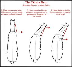 Glenshee Equestrian Centre: The Direct Rein Awesome diagram and description!