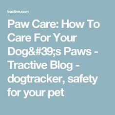Paw Care: How To Care For Your Dog's Paws - Tractive Blog - dogtracker, safety for your pet