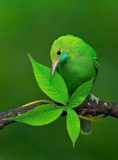 Most Beautiful Birds, Pretty Birds, Love Birds, Animals Beautiful, Exotic Birds, Colorful Birds, Mundo Animal, Nature Images, Cute Funny Animals