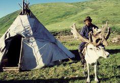 Nenets reindeer herder, Siberia