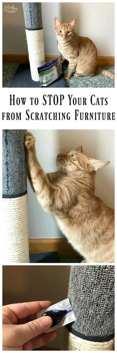 how to stop cats from scratching furniture quick and easy way to stop cats from